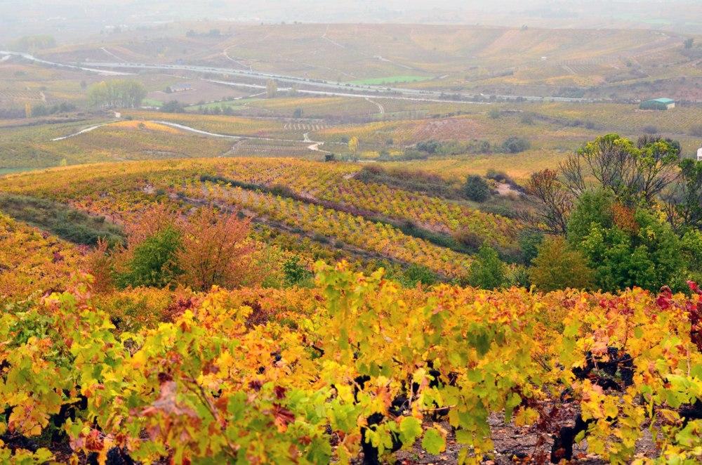 el_bierzo_wine_region